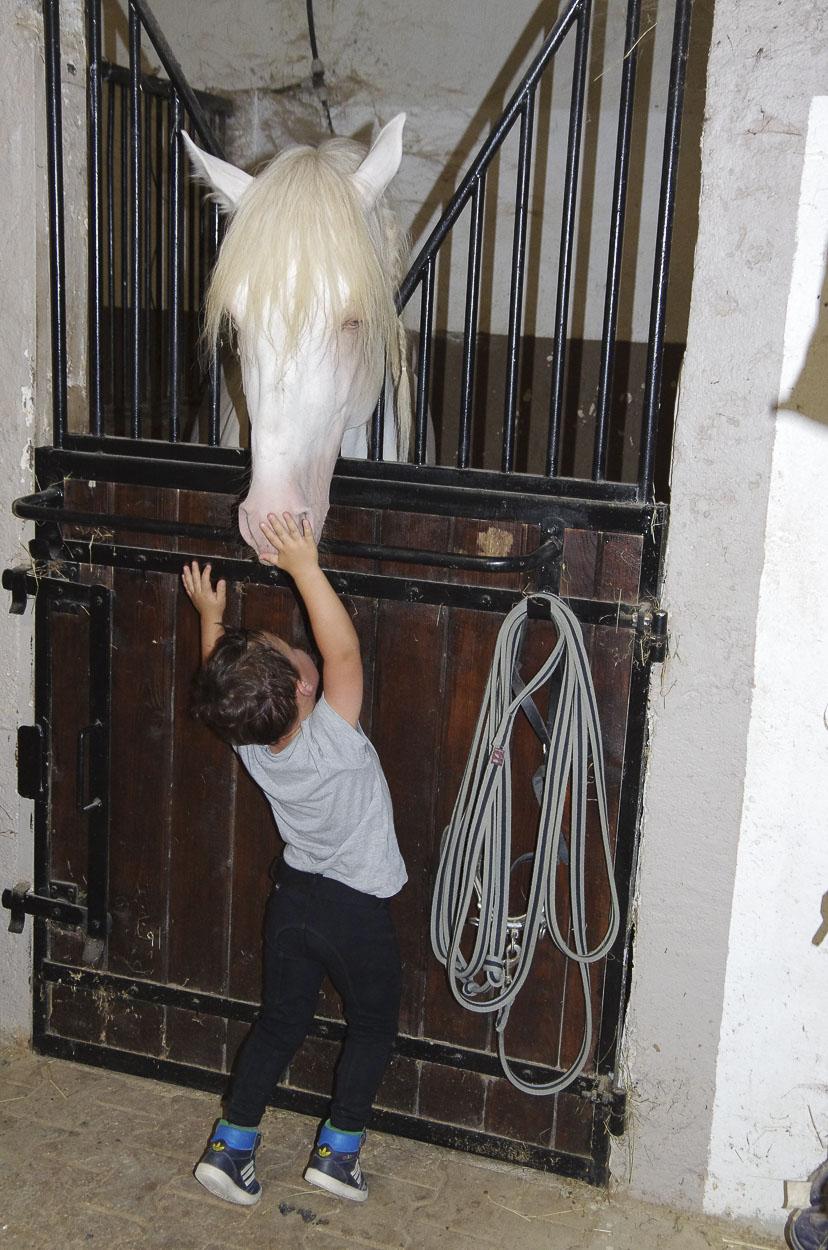 Box interne pension de chevaux PCA