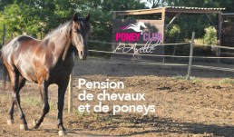 pension de chevaux et de poneys au Poney Club d'Axelle à Lattes Maurin